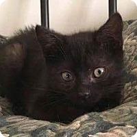 Adopt A Pet :: Jax - Mount Laurel, NJ