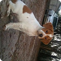 Adopt A Pet :: Logan - Crestview, FL