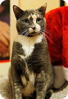 Domestic Shorthair Cat for adoption in Tustin, California - Sassy
