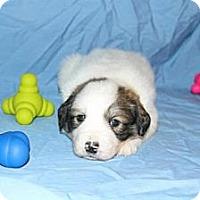 Adopt A Pet :: Charlie - Stilwell, OK