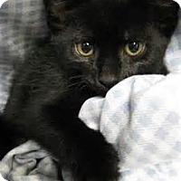 Adopt A Pet :: Genesis - Arlington, VA