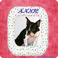 Adopt A Pet :: Annie - Alabaster, AL