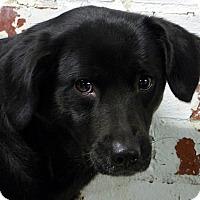 Adopt A Pet :: Solo - Falls Church, VA