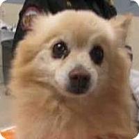 Adopt A Pet :: Quinn - Gilbert, AZ