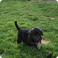 Adopt A Pet :: clark - mooresville, IN