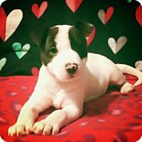 Adopt A Pet :: Pippa - Broken Arrow, OK