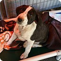 Adopt A Pet :: HAUS - Gustine, CA