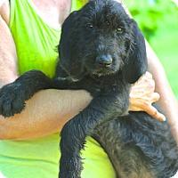 Adopt A Pet :: Paul Newman - Glastonbury, CT