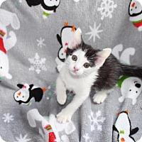Adopt A Pet :: Hugs - Union, KY