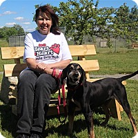 Adopt A Pet :: Annie - Elyria, OH