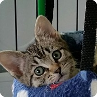 Adopt A Pet :: Yang - Burlington, WA
