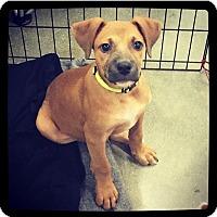 Adopt A Pet :: Draco - Grand Bay, AL