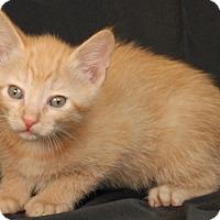 Adopt A Pet :: Wonton - Newland, NC