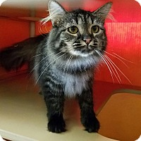 Adopt A Pet :: Donner - Elyria, OH