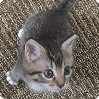 Adopt A Pet :: Pistachio - Gainesville, FL