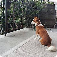 Adopt A Pet :: Schmoopy - New Orleans, LA