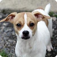 Adopt A Pet :: Aztec - Liberty Center, OH