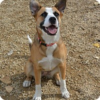 Adopt A Pet :: Daisy Mae - Meridian, ID