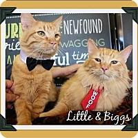 Adopt A Pet :: BFFs Biggs & Little - Arlington, TX