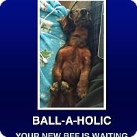 Adopt A Pet :: Yammy - Morrisville, PA
