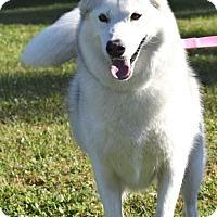 Adopt A Pet :: Harmony - Jupiter, FL
