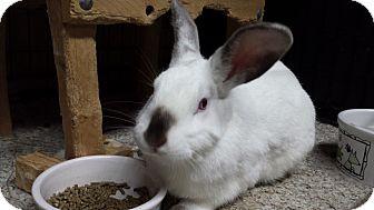 Florida White Mix for adoption in Williston, Florida - Magnolia
