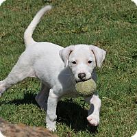 Adopt A Pet :: Flo - Tomball, TX
