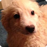 Adopt A Pet :: Elliott - Hagerstown, MD