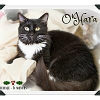 Adopt A Pet :: O'Hara - Fallbrook, CA