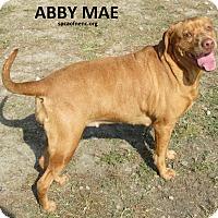 Adopt A Pet :: Abby Mae - Elizabeth City, NC