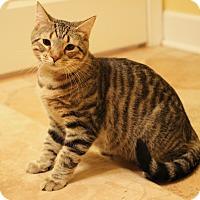 Adopt A Pet :: Tyler - Carlisle, PA
