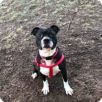 Adopt A Pet :: Reggie - Columbus, OH