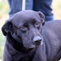 Adopt A Pet :: Poncho - Glastonbury, CT