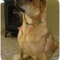 Adopt A Pet :: Deja - Bethesda, MD