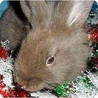 Adopt A Pet :: Trix - Maple Shade, NJ