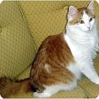Adopt A Pet :: Charlie - Alexandria, VA
