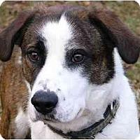 Adopt A Pet :: Zoey - Mocksville, NC