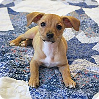 Adopt A Pet :: Emme - Homewood, AL