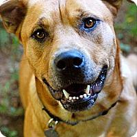 Adopt A Pet :: Odie - Marietta, GA