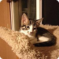 Adopt A Pet :: Star - San Jose, CA
