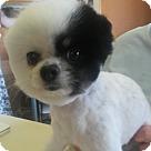 Adopt A Pet :: Mattie