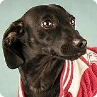 Adopt A Pet :: Donnie Cheadle - Houston, TX