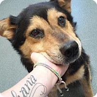 Adopt A Pet :: Goliath - Elmwood Park, NJ