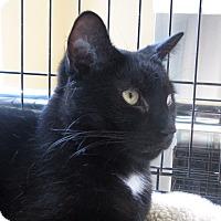 Adopt A Pet :: Papo - New York, NY