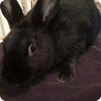 Adopt A Pet :: AbbyCadabby - Watauga, TX