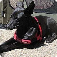 Adopt A Pet :: Shiny - San Ysidro, CA