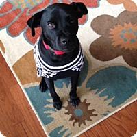 Adopt A Pet :: Jack - Norcross, GA