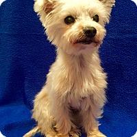 Adopt A Pet :: Riley - Encino, CA