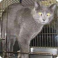 Adopt A Pet :: Justin - Herndon, VA