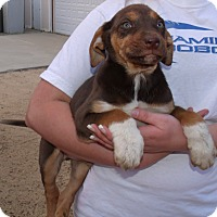 Adopt A Pet :: RANDALL - Corona, CA